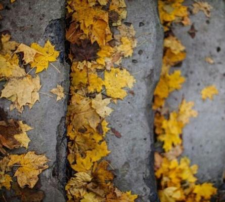 perdido entre amarillos otoño
